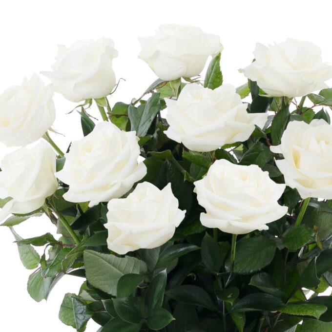 2021_FH Flores y Decoracion_WEB_Rosas Holandesas (2)