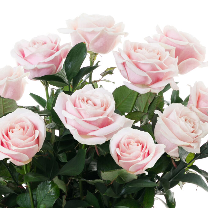 2021_FH Flores y Decoracion_WEB_Rosas Holandesas (4)