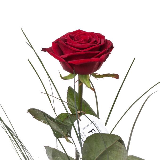 Rosa y eucalipto - FH Floristería - Fernando hijo - Flores y decoración - Murcia (17)